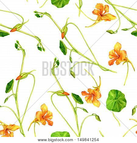 Seamless pattern with watercolor drawing orange flowers, background with painted wild plants, botanical illustration in vintage style, color drawing floral ornament, hand drawn illustration