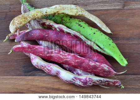 Young pots of various type of organic beans on dark wooden background in natural light