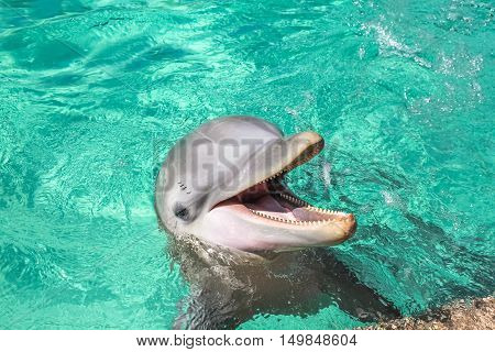 A cute laughing dolphin in the water.
