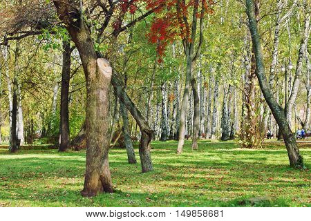 Trees in park among green grass and fallen leaves at sunny autumn day