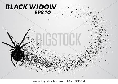 Black widow from the particles. The silhouette of the black widow of small circles.