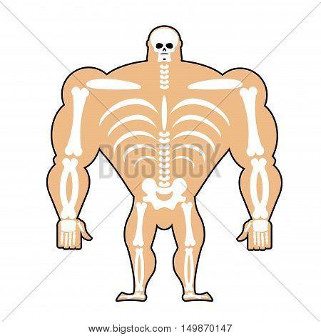 Human Structure. Skeleton Men. Construction Of Athlete. Bones And Skull. Athlete Internal Organs. Hu