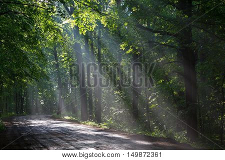 Ground road crossing old deciduous forest with beams of light entering, Bialowieza Forest, Poland, Europe