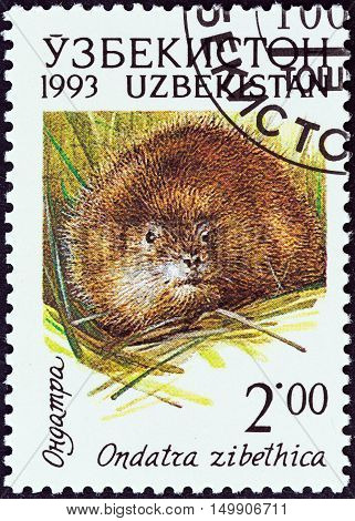 UZBEKISTAN - CIRCA 1993: A stamp printed in Uzbekistan from the