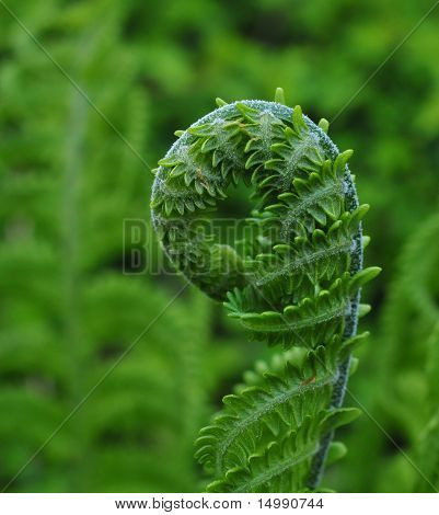 Fresh Green Fern Frond