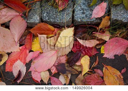 Autumn leaf, leaves with raindrops on stone road
