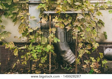 pipe overgrown with grass green plants communication