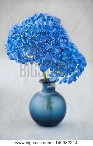 Beautiful hydrangea flowers in a blue vase on a table.