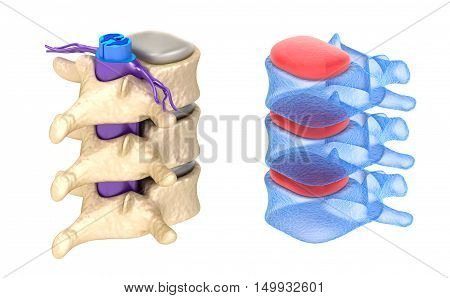 Spine x-ray view isolated on white,3D render