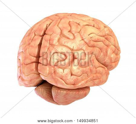 Human brain 3D model isolated, 3D render