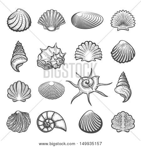 Vector hand drawn sea shell set. Shells drawing sketch isolated on white