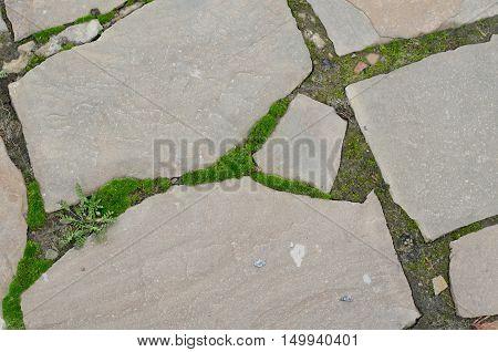 Pattern Background Of Cobblestone Pavement With Moss