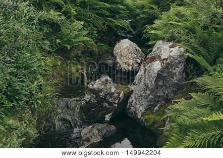 Lush green ferns and moss-covered stones near a stream in forest. Arctic summer the tundra Norway.