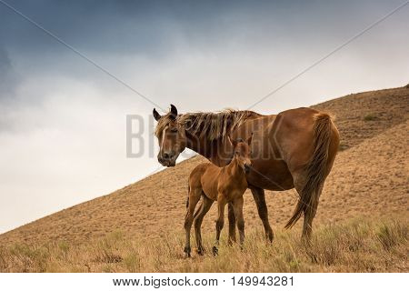 Mare and foal red suit standing on the hillside against the backdrop of a cloudy sky