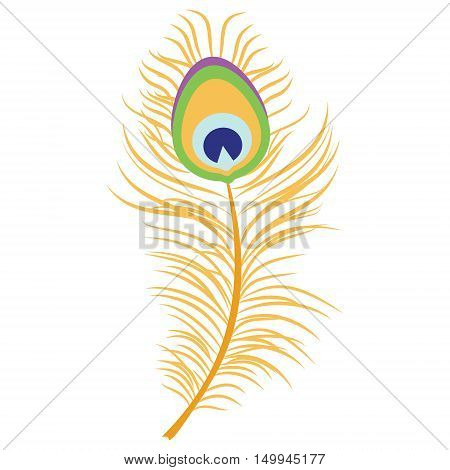 Vector illustration beautiful peacock feather. Decoration element. Peacock plume