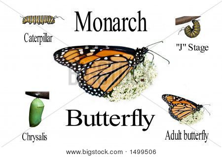 Monarch Compilation Lettering
