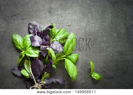 Green and purple basil leaves at dark slate background. Space for text.