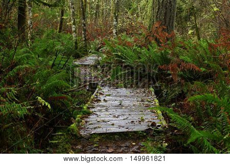a picture of an exterior Pacific Northwest forest hiking trail with wood bridges