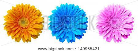 blue,pink,yellow flower heads isolated on a white background