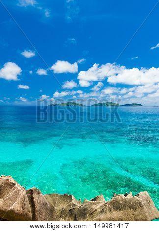 Jungle Bay Dream
