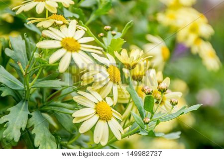 Colorful fresh spring daisy flowers on green bokeh background. Very shallow DOF.