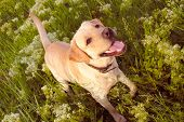picture of dog park  - dog on walk in park looks on background of grass - JPG