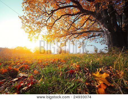 Grote herfstbladeren eiken met rode op een blauwe hemelachtergrond