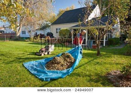 Cleaning Yard