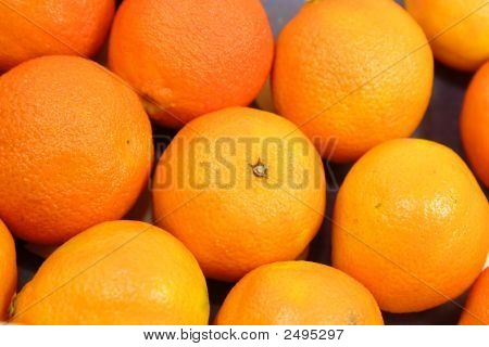 Little Oranges