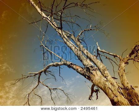 Foto de árvore vignetted