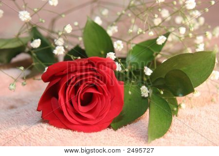 Red Rose With Baby'S Breath On Pink Background