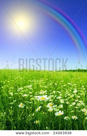 Field of chamomiles,sun and rainbow.