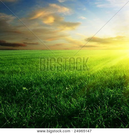 Green field at sunset.