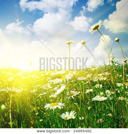 Flower field ,blue sky and sun.