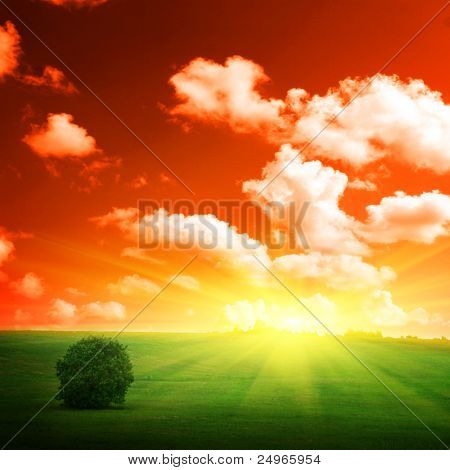 Single tree in a field and sunset.