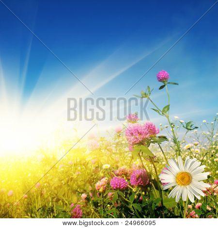 Campo de flores em dia ensolarado.