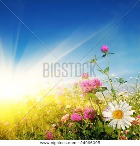 Flower field on sunny day.