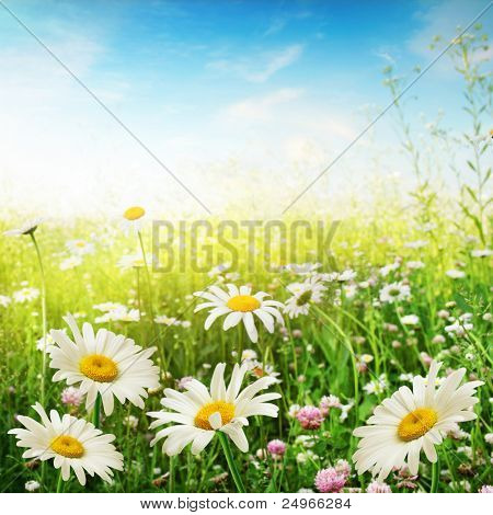 Campo de flores em um dia ensolarado.