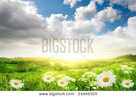 Flower field,blue sky and sun.
