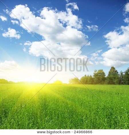 Green field,forest and sun.
