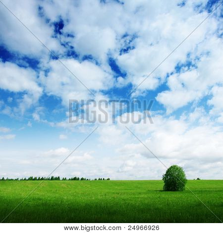Lonely tree under blue sky.