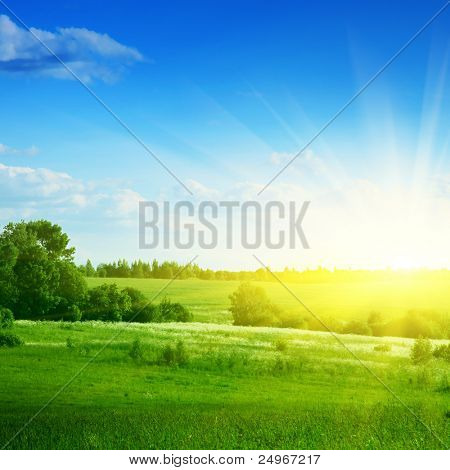 Green field,trees,blue sky and sun.
