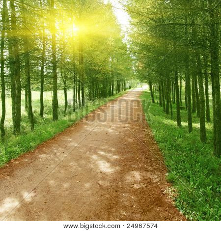 Country road,green trees and sun.