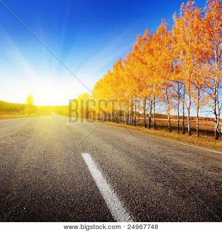 Road and sunny autumn day.