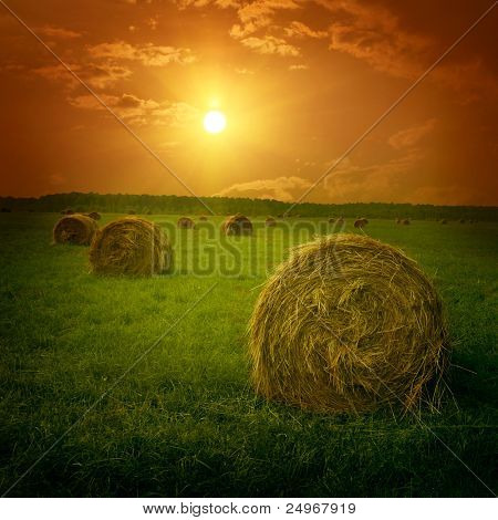 Field with hay bales at twilight.