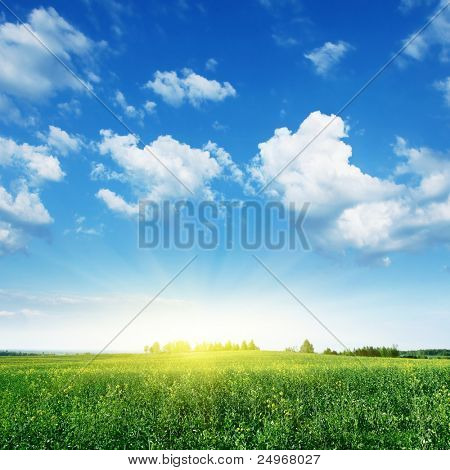 Summer landscape with rapeseed field,blue sky and sun.