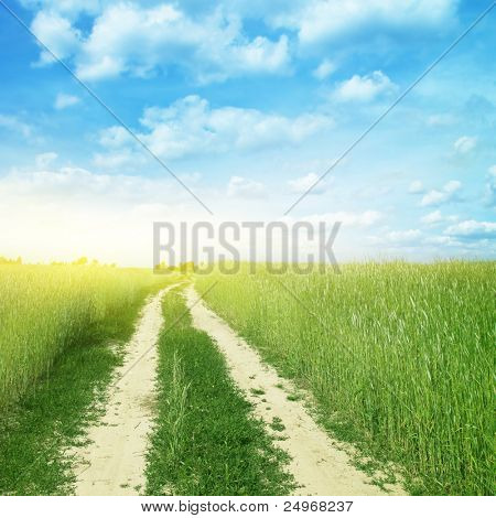 Country road in wheat field and sunlight.