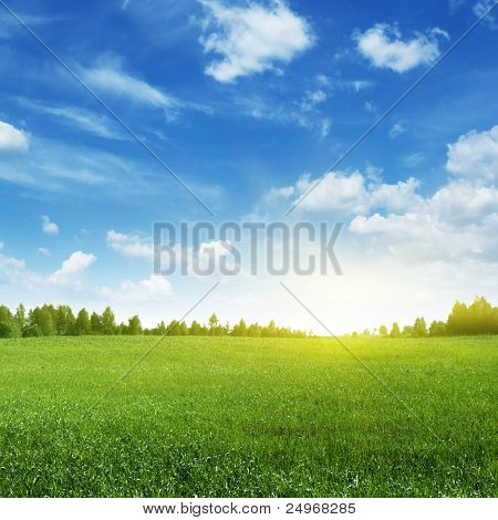 Green Field and helle Sonne.