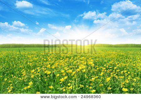 Flower field in spring time.