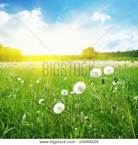 Summer field and sunlight in blue sky.